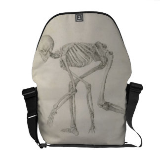 Human Skeleton: Lateral view in Crouching Posture, Messenger Bag