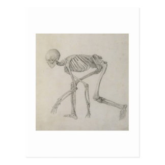 Human Skeleton: Lateral view in Crouching Posture, Postcard