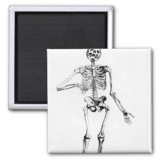 Human Skeleton Magnet