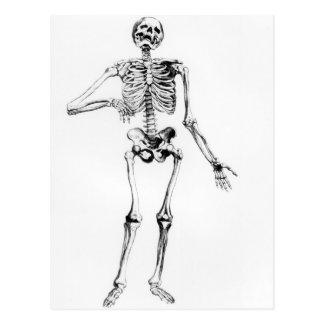 Human Skeleton Postcard