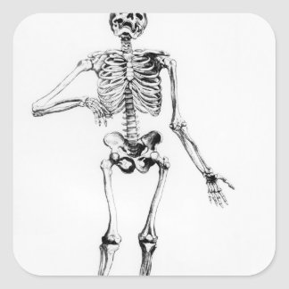 Human Skeleton Square Sticker