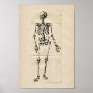 Human Skeleton Vintage Anatomy Print