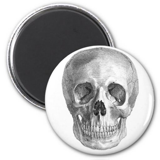 Human skull anatomy sketch drawing 2 inch round magnet