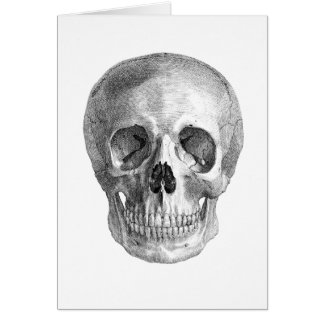Human skull anatomy sketch drawing card