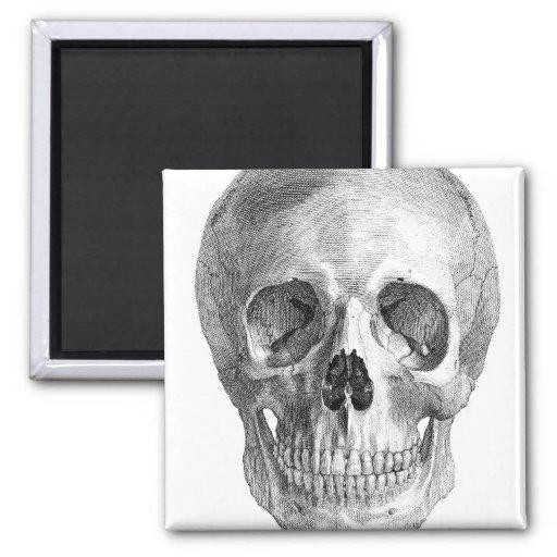 Human skull anatomy sketch drawing refrigerator magnet