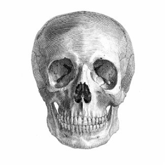 Human skull anatomy sketch drawing photo sculpture