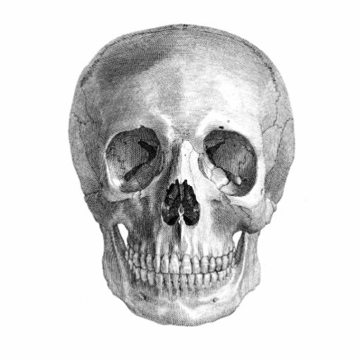 Human skull anatomy sketch drawing photo sculpture