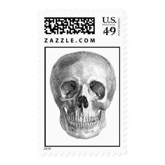 Human skull anatomy sketch drawing postage