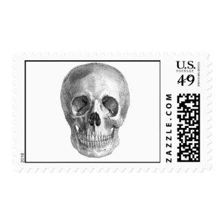 Human skull anatomy sketch drawing postage stamp