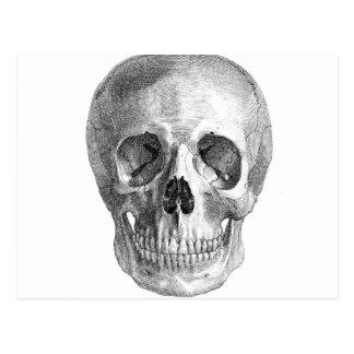 Human skull anatomy sketch drawing postcard