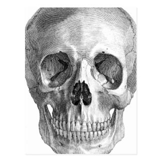 Human skull anatomy sketch drawing postcard