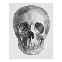 Human skull anatomy sketch drawing posters