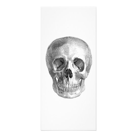 Human skull anatomy sketch drawing rack card