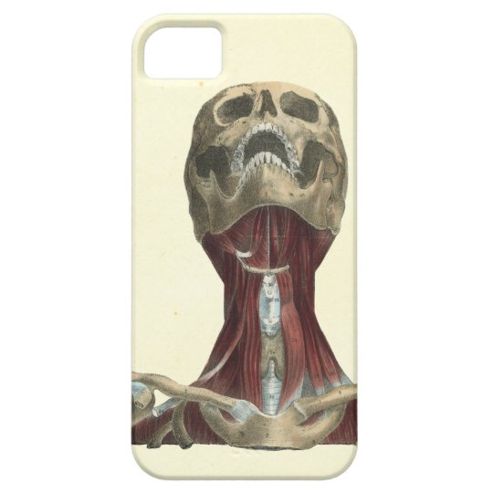 Human Skull And Neck Muscles Anatomy Case Mate Iphone Case Zazzle
