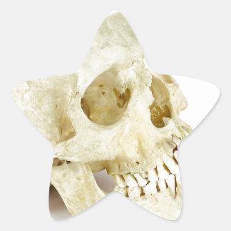 Human skull as fruit scale star sticker