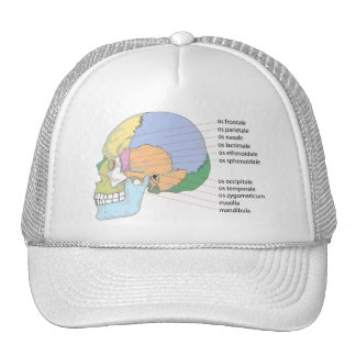 Human Skull Bone Name Chart Trucker Hat