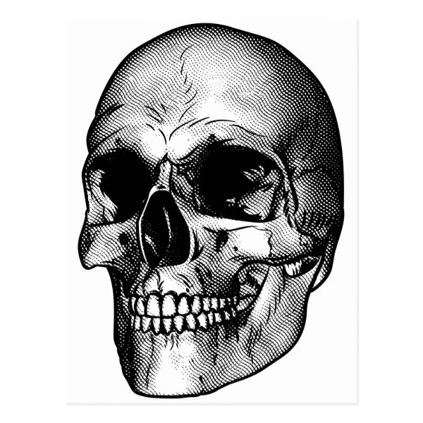 Human Skull Drawing Postcard