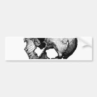 Human Skull Vintage Illustration Bumper Sticker
