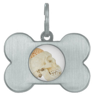 Human skull with brains pet name tags