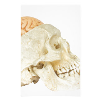 Human skull with brains stationery