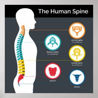 Human Spine Anatomy Chart Poster