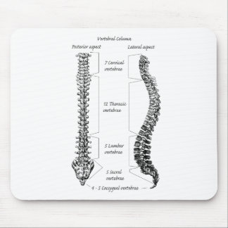 Human spine mouse pad