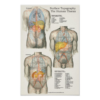 Human Surface Topography Anatomy Chart Posters