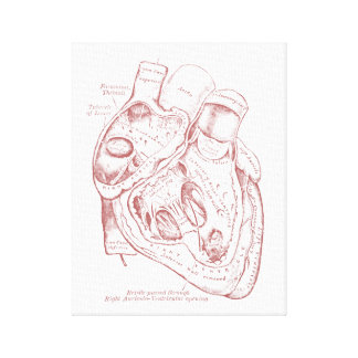 Human Vintage Anatomy Heart red and white Canvas Print