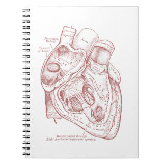 Human Vintage Anatomy Heart Red and White Spiral Notebook
