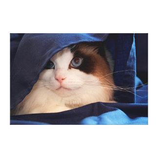 Humane Society cat 2 Canvas Print