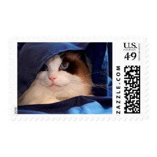 Humane Society cat 2 Postage
