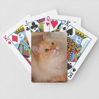Humane Society cat Bicycle Playing Cards