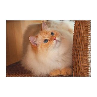 Humane Society cat Canvas Print