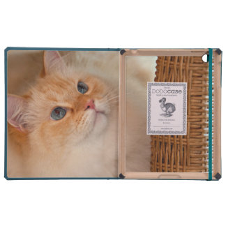 Humane Society cat