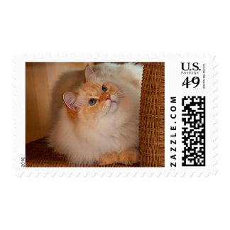 Humane Society cat Postage