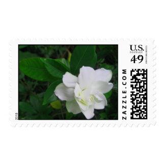 Humble Gardenia Postage Stamps