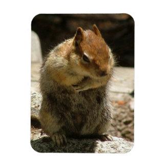 Humble Squirrel Rectangular Photo Magnet