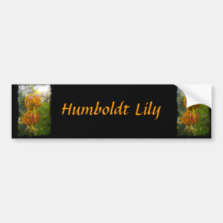 Humboldt Lilies Sunburst Bumper Sticker
