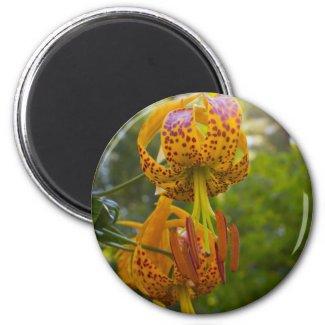 Humboldt Lilies Sunburst Fridge Magnet