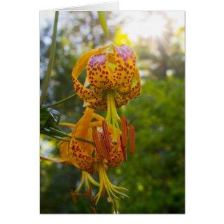 Humboldt Lilies Sunburst Greeting Cards