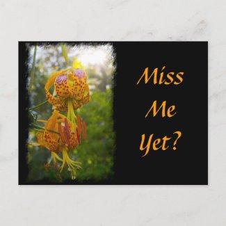 Humboldt Lilies Sunburst Post Cards