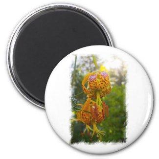Humboldt Lilies Sunburst Refrigerator Magnets