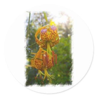 Humboldt Lilies Sunburst Round Sticker