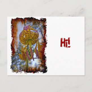 Humboldt Lily Post Cards