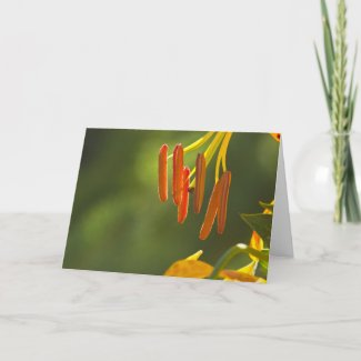 Humboldt Lily Stamens Greeting Cards