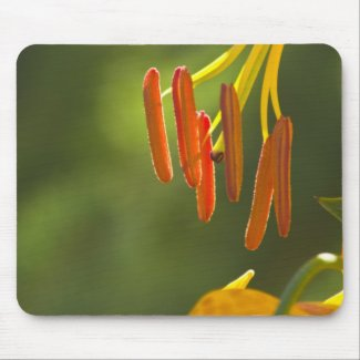 Humboldt Lily Stamens Mouse Pad