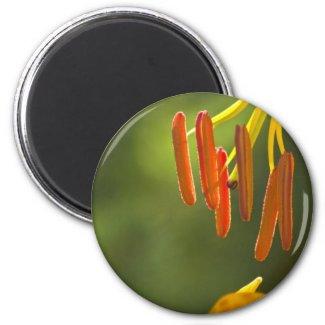 Humboldt Lily Stamens Refrigerator Magnet