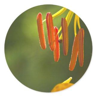 Humboldt Lily Stamens Round Stickers