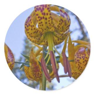Humboldt Lily Sticker