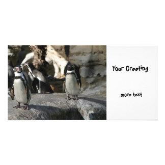Humboldt Penguin Card